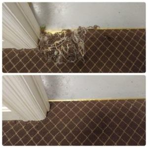 pet damaged carpet repair Louisville